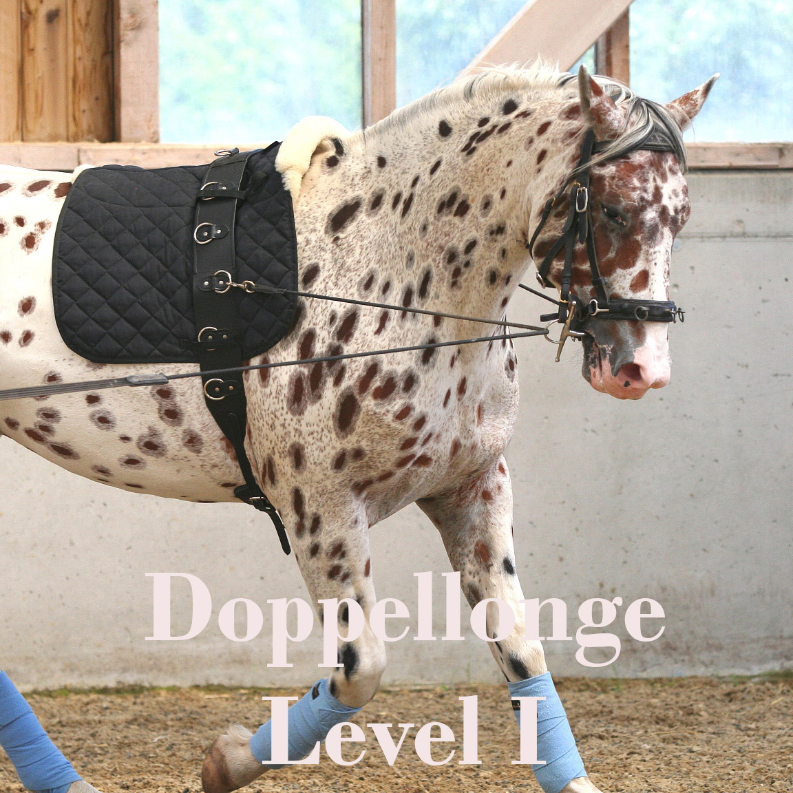 Doppelonge Level 1