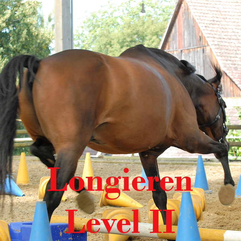 Longieren Level 2